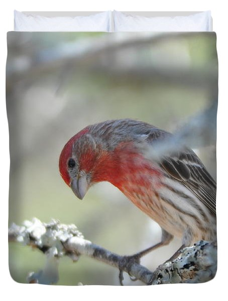 House Finch Duvet Cover