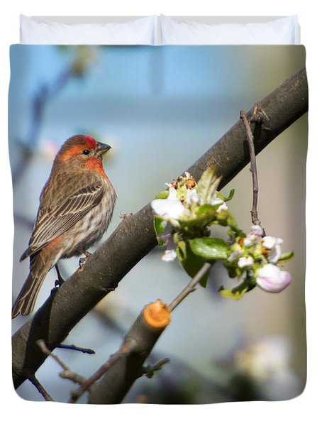 House Finch Duvet Cover by Mike Dawson