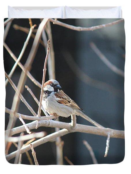 Duvet Cover featuring the photograph House Sparrow by Ann E Robson
