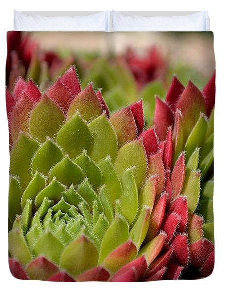 Houseleeks Aka Sempervivum From The Side Duvet Cover