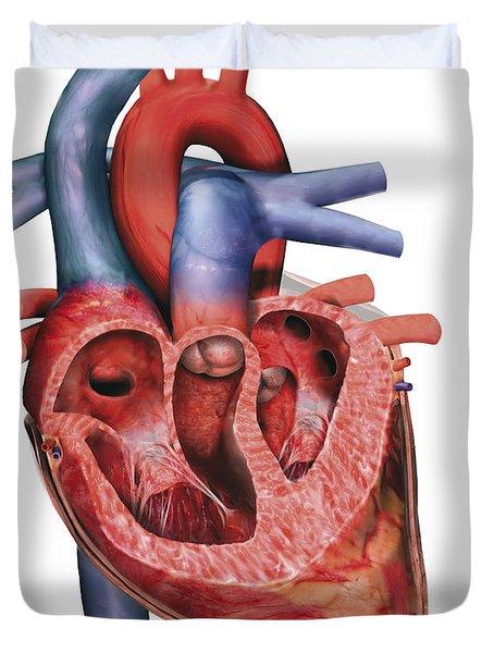Human Heart In Cross-section Duvet Cover