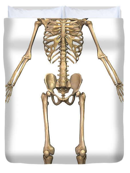 Human Skeletal System, Front View Duvet Cover by Stocktrek Images