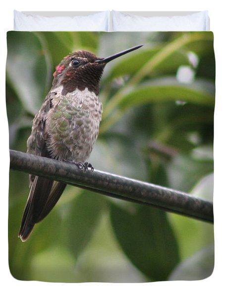 Hummer On A Wire Duvet Cover