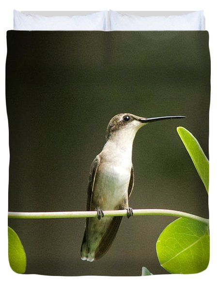 Humming Bird Break Duvet Cover