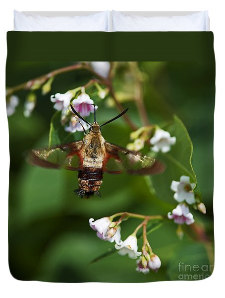 Hummingbird Clearwing... Duvet Cover by Nina Stavlund