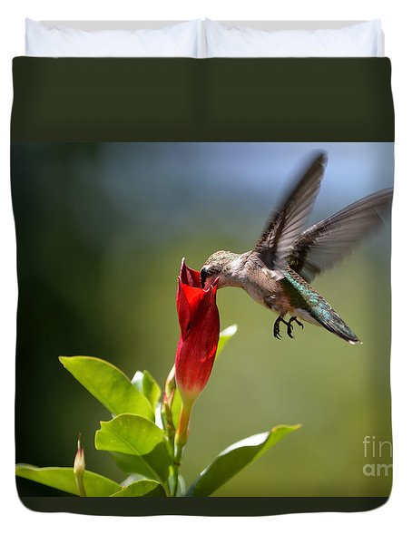 Hummingbird Dipping Duvet Cover by Debbie Green