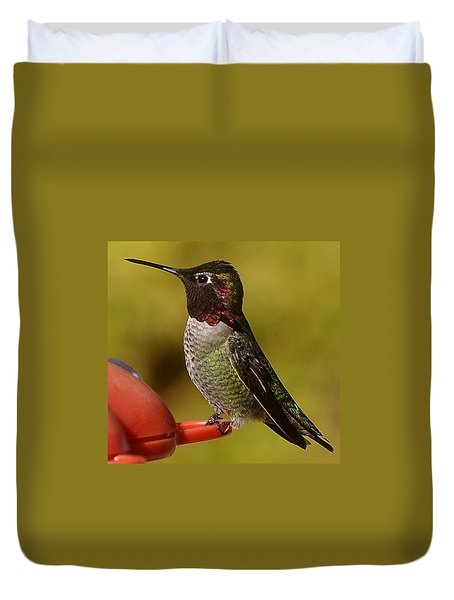 Hummingbird Male Allan Duvet Cover by Jay Milo