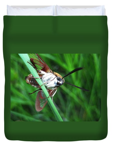 Hummingbird Moth 2 Duvet Cover by Shirley Sirois