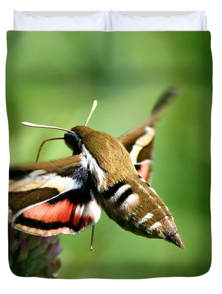 Hummingbird Moth From Behind Duvet Cover by Neal Eslinger