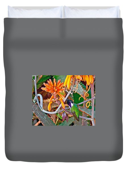 Hummingbird On Aloe In Living Desert In Palm Desert-california Duvet Cover