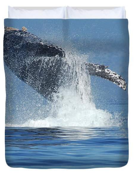 Humpback Whale Breaching Duvet Cover by Bob Christopher
