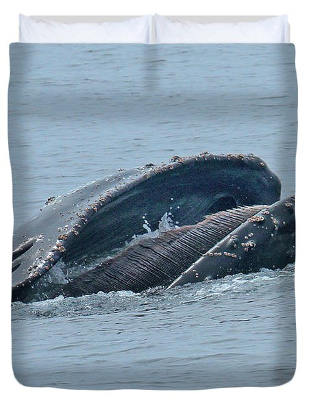 Duvet Cover featuring the photograph Humpback Whale  Lunge Feeding Monterey Bay 2013 by California Views Mr Pat Hathaway Archives