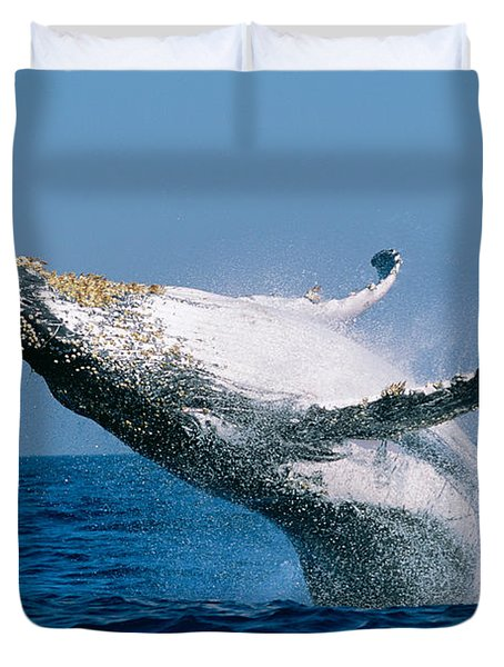 Humpback Whale Megaptera Novaeangliae Duvet Cover by Panoramic Images
