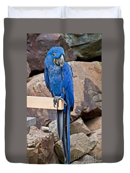 Hyacinth Macaw Parrot Bird Art Prints Duvet Cover