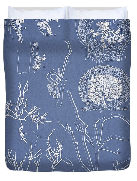 Hyalosiphonia Caespitosa Okamura Valonia Confervoides Duvet Cover by Aged Pixel