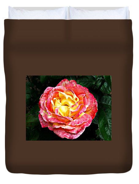 Hybrid Tea Rose ' Love And Peace ' Duvet Cover by William Tanneberger
