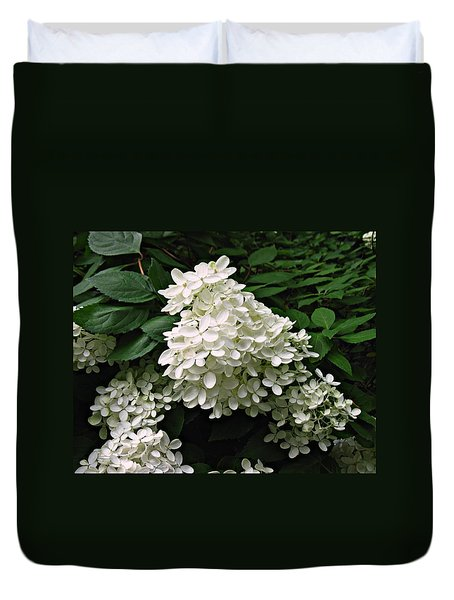 Hydrangea Arborescens ' Annabelle ' Duvet Cover by William Tanneberger