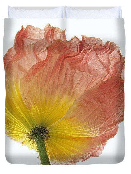 Iceland Poppy 1 Duvet Cover