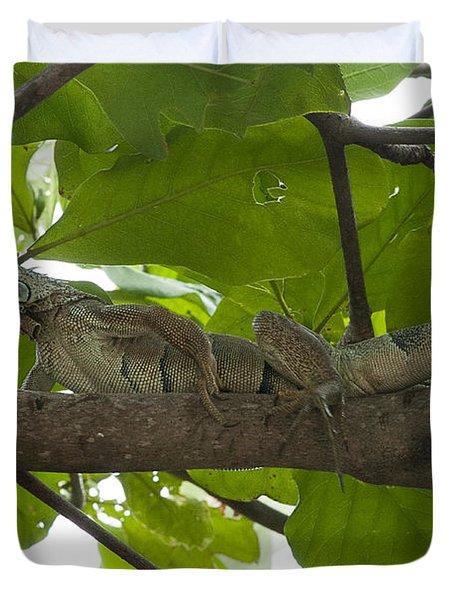 Iguana In Tree Duvet Cover by Dan Friend
