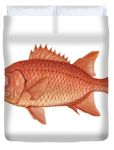 Illustration Of A Brick Soldierfish Duvet Cover by Carlyn Iverson