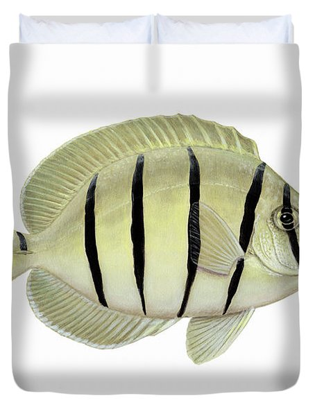 Illustration Of A Convict Tang Fish Duvet Cover by Carlyn Iverson