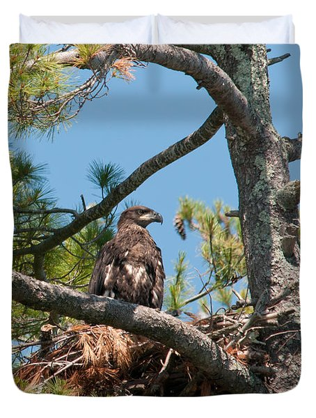 Immature Bald Eagle Duvet Cover by Brenda Jacobs