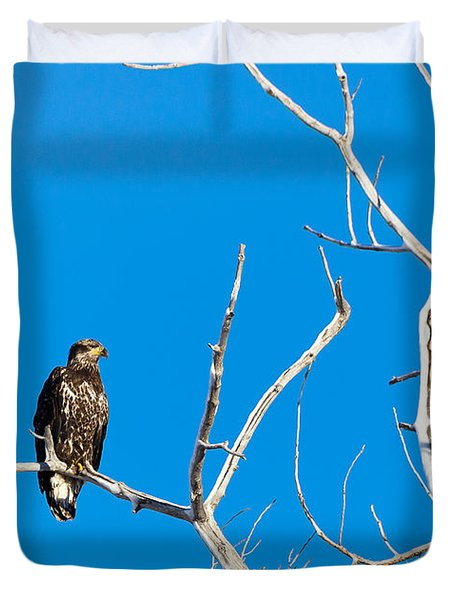 Immature Bald Eagle Duvet Cover