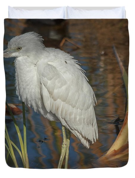 Immature Little Blue Heron Duvet Cover by Jane Luxton