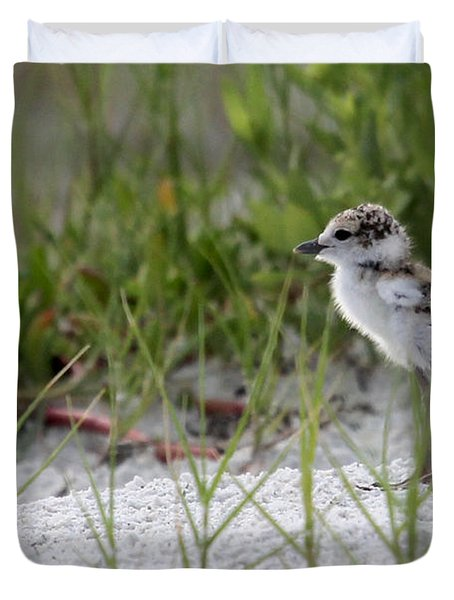 In The Grass - Wilson's Plover Chick Duvet Cover