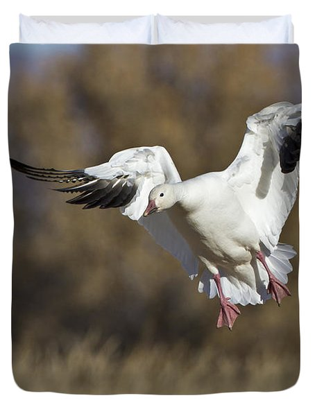 Duvet Cover featuring the photograph Incoming Snow Goose by Bryan Keil