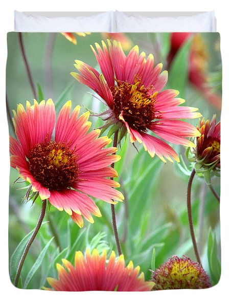 Indian Blanket Wildflowers Duvet Cover