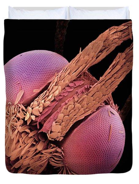 Indian Meal Moth Sem 420x Duvet Cover by Albert Lleal