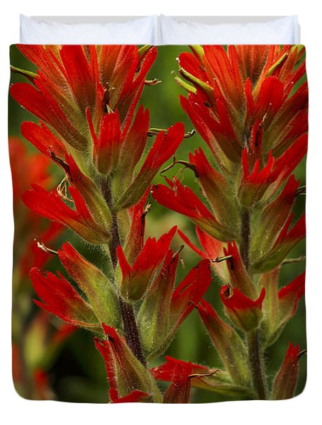 Indian Paintbrush Duvet Cover by Alan Vance Ley