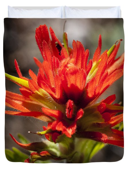 Indian Paintbrush Duvet Cover by Belinda Greb