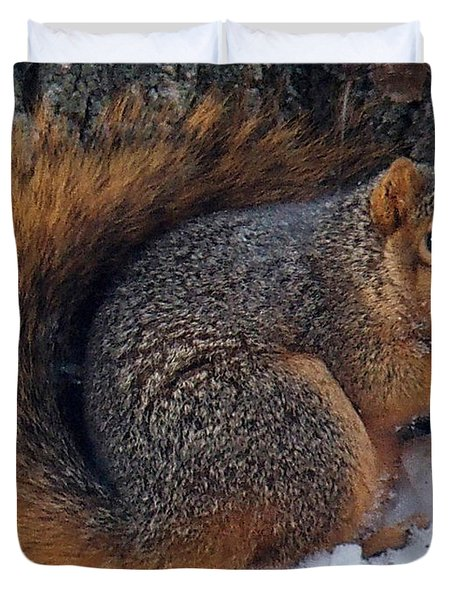 Indiana Squirrel In Winter With Nut Duvet Cover by Steve Archbold