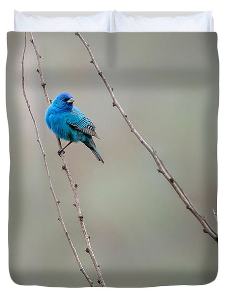 Indigo Bunting Duvet Cover by Bill Wakeley