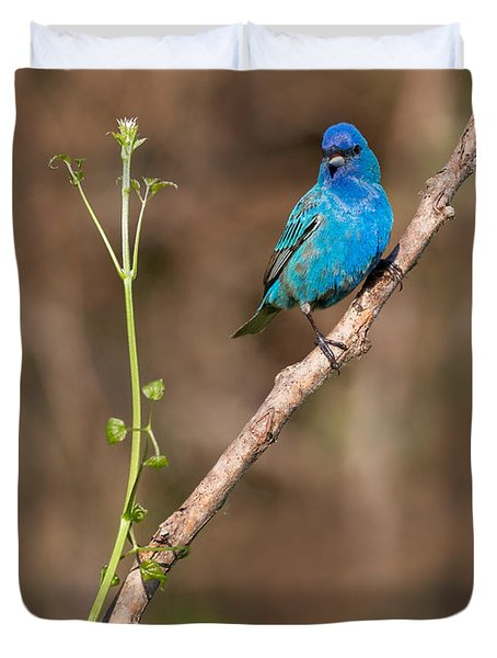 Indigo Bunting Portrait Duvet Cover by Bill Wakeley