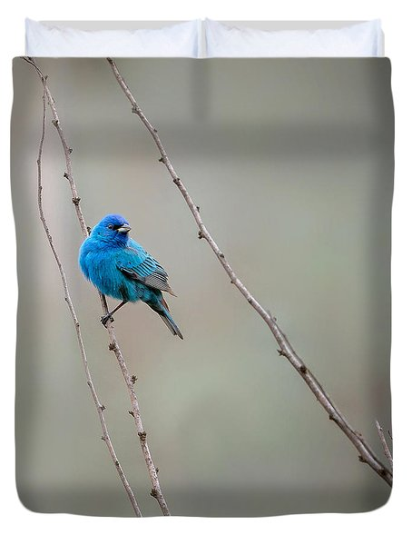 Indigo Bunting Square Duvet Cover by Bill Wakeley