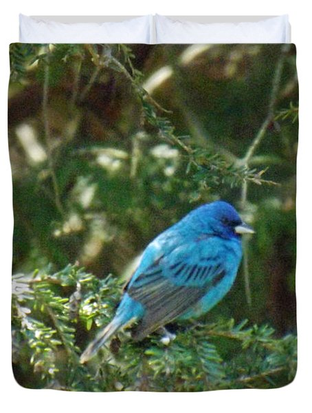 Indigo Bunting Visit Duvet Cover by Brenda Brown