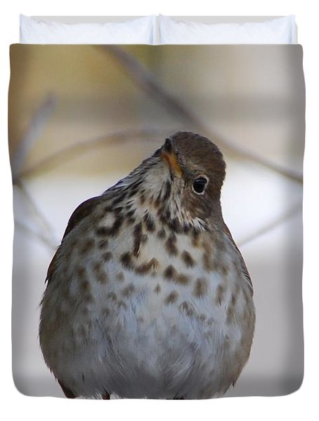 Inquisitive Hermit Thrush Duvet Cover