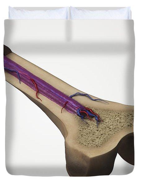 Internal Anatomy Of Bone Femur Duvet Cover