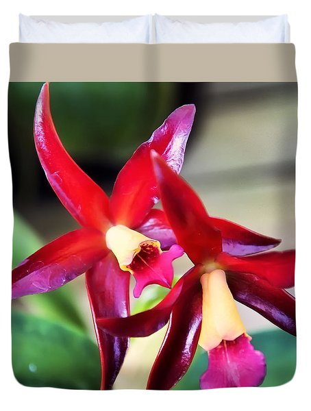 Intrageneric Brassia Hybrid Orchid Duvet Cover by Chris Flees