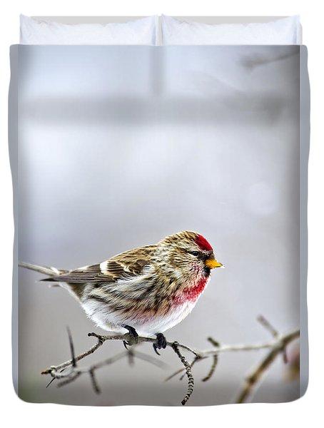 Irruptive Bird Common Redpoll Duvet Cover by Christina Rollo