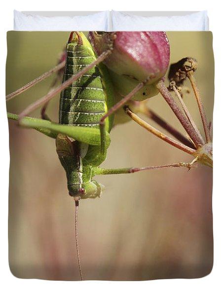 Isophya Savignyi - Bush Cricket Duvet Cover by Alon Meir