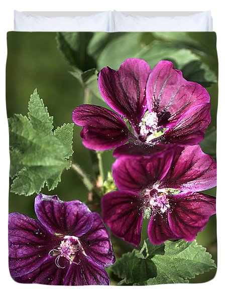 Ivy-leafed Geraniums   Duvet Cover by Joy Watson
