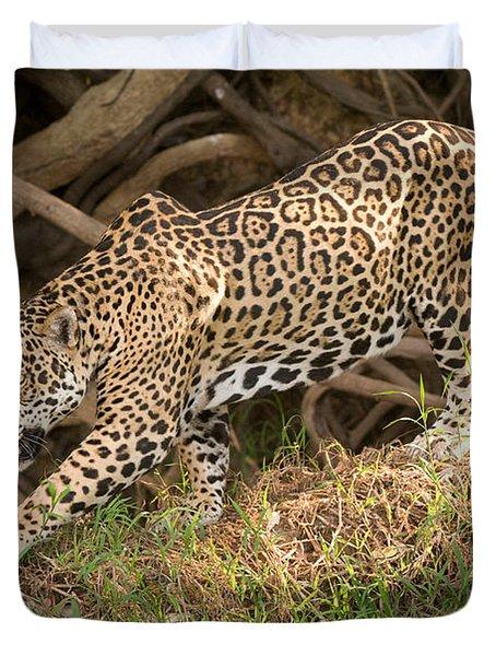 Jaguar Panthera Onca Foraging Duvet Cover