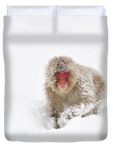 Japanese Macaque In Snow Jigokudani Duvet Cover