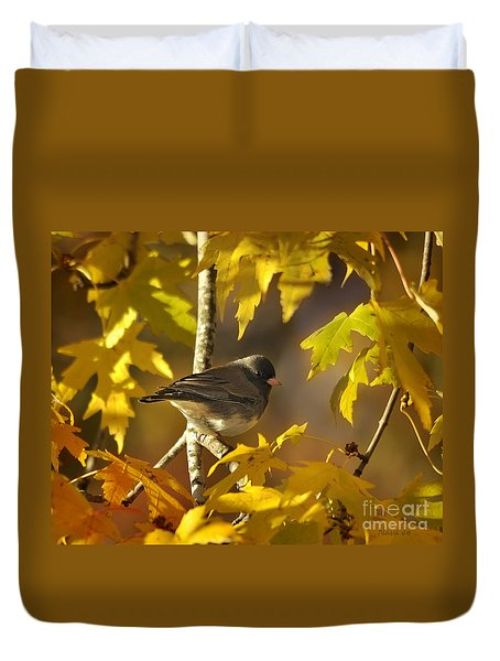 Junco In Morning Light Duvet Cover by Nava Thompson