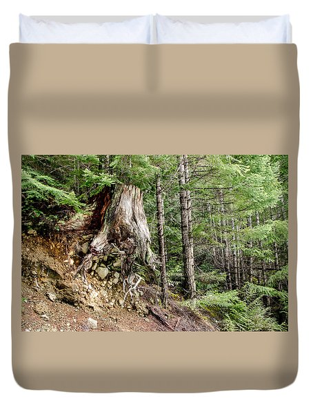 Just Hanging On Old Growth Forest Stump Duvet Cover by Roxy Hurtubise