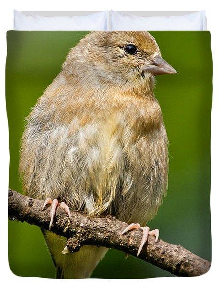 Juvenile American Goldfinch Duvet Cover